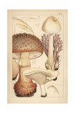 Blusher Mushroom, Grisette, Miller and Coral Fungus Giclee Print by Mordecai Cubitt Cooke