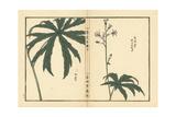 Shredded Umbrella Plant, Syneilesis Palmata Giclee Print by Bairei Kono