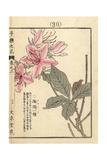 Spider Azalea, Rhododendron Macrosepalum Giclee Print by Bairei Kono