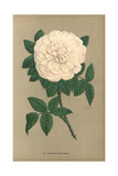 Marie De Saint-Jean Rose, Variety of Rosa Portlandica Giclee Print by Francois Grobon