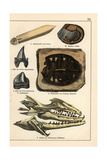 Fossils of Extinct Celaphopod, Crustacean, Turtle and Shark Giclee Print