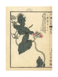 Japanese Peppervine, Ampelopsis Japonica Giclee Print by Bairei Kono
