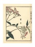 Ransou or Pei Lan, Eupatorium Fortunei Giclee Print by Bairei Kono