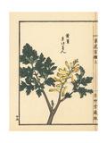 Kikeman or Fumewort, Corydalis Pallida Var Tenuis Giclee Print by Bairei Kono