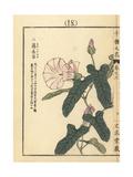 Morning Glory, Calystegia Japonica Choisy Giclee Print by Bairei Kono