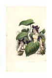 Sweet Violet Flower Fairy, Viola Odorata Giclee Print by Louis Lassalle