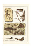 Fossils of Skeletons of Extinct Dinosaurs and Mammals Giclee Print