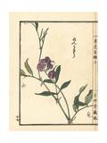 Renrisou or China Pyatizhilkovaya, Lathyrus Quinquenervius Giclee Print by Bairei Kono