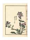 Yamahotogisu or Toad Lily, Tricyrtis Macropoda Giclee Print by Bairei Kono