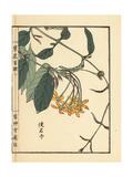 Shikunshi, Chinese Honeysuckle, Combretum Indicum Giclee Print by Bairei Kono