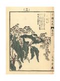 Japanese Andromeda, Pieris Japonica Giclee Print by Bairei Kono