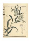 Amigasayuri or Thunberg Fritillary, Fritillaria Thunbergii Giclee Print by Bairei Kono