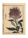 Plumed Cockscomb Variety, Celosia Argentea Giclee Print by Bairei Kono