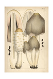 Shaggy Ink Cap and Common Ink Cap Mushroom Giclee Print by Mordecai Cubitt Cooke