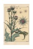 Thistle Botanical Study Giclee Print by Eugene Grasset