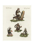 Toque Macaque, Tufted Capuchin, Langur, and Red-Handed Tamarin Giclee Print