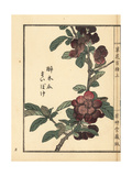 Boke or Flowering Quince, Chaenomeles Speciosa Giclee Print by Bairei Kono