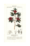 Azalea Indica Giclee Print by Pierre Turpin