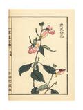 Yahousenka or Wild Balsam, Impatiens Balsamina Giclee Print by Bairei Kono
