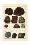 Metals Including Stalactitic Lepidocrocite, Hematite, Limonites, Etc Giclee Print