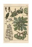 Chestnut Tree Botanical Study Giclee Print by Eugene Grasset