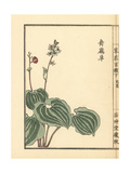 Maijirusou or Snakeberry, Maianthemum Dilatatum Giclee Print by Bairei Kono