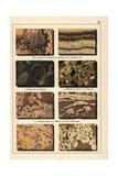 Marble Varieties Giclee Print