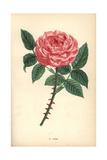Noemi Rose, Hybrid Giclee Print by Francois Grobon