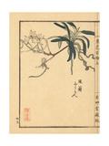 Fuuran, Neofinetia Falcata Giclee Print by Bairei Kono