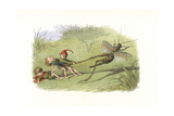 Cruel Elves Holding on to a Cricket's Leg Giclee Print by Richard Doyle