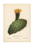 Prickly Pear, Opuntia Ficus Indica Giclee Print by Hannah Zeller
