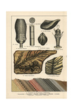 Fossil Conifer Trees, Shells and Lobster Giclee Print
