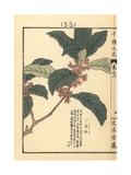 Sweet Osmanthus, Osmanthus Fragrans Var Aurantiacus Giclee Print by Bairei Kono
