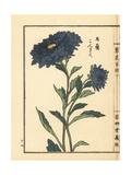 Kongiku or Japanese Aster, Aster Ageratoides Giclee Print by Bairei Kono