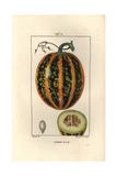 Pumpkin, Cucurbita Maxima, Showing Ripe Fruit and Section Reproduction procédé giclée par Pierre Turpin