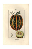 Pumpkin, Cucurbita Maxima, Showing Ripe Fruit and Section Giclee Print by Pierre Turpin