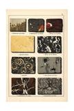 Varieties of Marble Giclee Print
