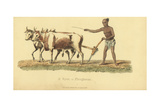 Ryot or Indian Ploughman Giclee Print