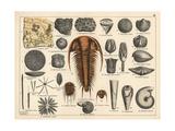 Trilobite, Sponge and Zoophyte Fossils Giclée-Druck