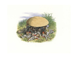 Elves Sleeping under a Toadstool Giclee Print by Richard Doyle