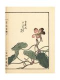 Nouzenharen or Garden Nasturtium, Tropaeolum Majus Giclee Print by Bairei Kono