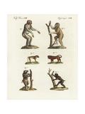 Chimpanzee, Bornean Orang Utan, and Baboons Giclee Print