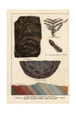 Fern Fossils from the Permian Giclee Print