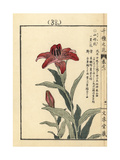 Morning Star Lily, Lilium Concolor Giclee Print by Bairei Kono