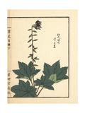 Haguma or Ainsliaea Acerifolia Giclee Print by Bairei Kono