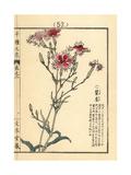 Large Pink, Dianthus Superbus L Longicalycinus Giclee Print by Bairei Kono