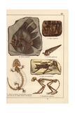Fossil Skeletons of Fish, Shell, Bird and Monkey Giclee Print
