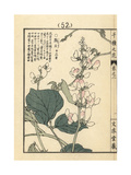 Common Bean Flower, Phaseolus Vulgaris L Giclee Print by Bairei Kono