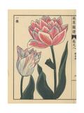 Tulip, Tulipa Gesneria L Flore Pleno Giclee Print by Kan'en Iwasaki