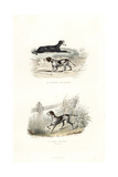 Whippet, Basset Hound, and Hunting Dog Giclee Print by Janet Lange